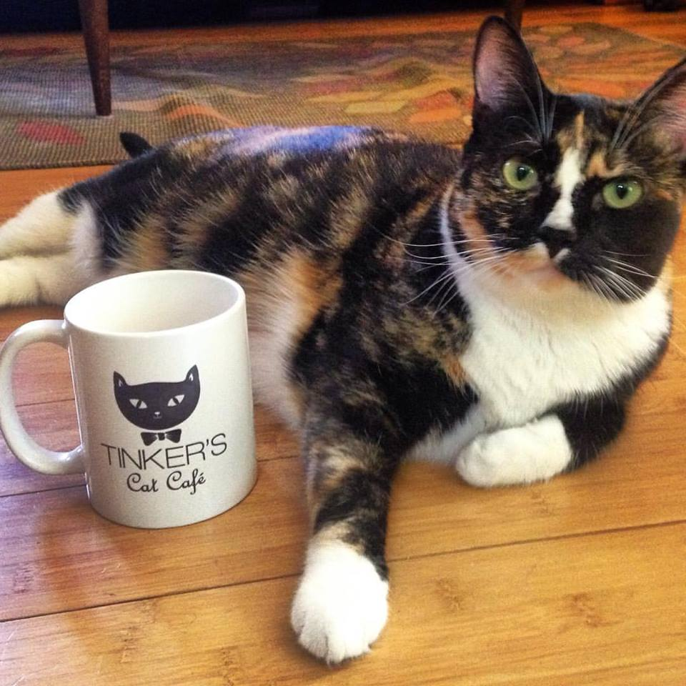 Tinkers Cat Cafe In The News